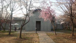 無言館の桜